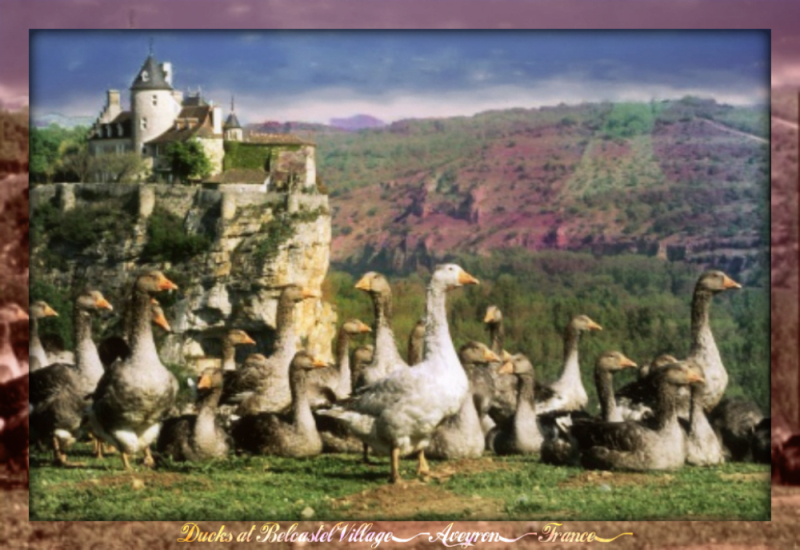 Belcastel - ducks-in-front-of-chateau-de-belcastel-dordogne-france1