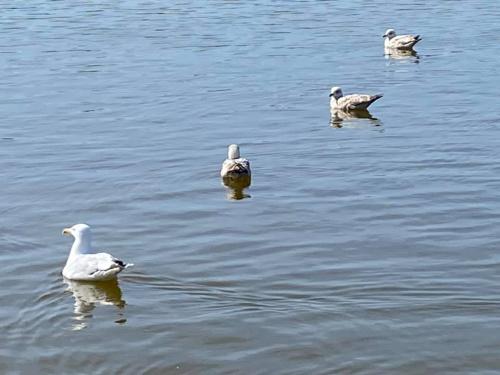 #2 Social distancing seagulls (1)